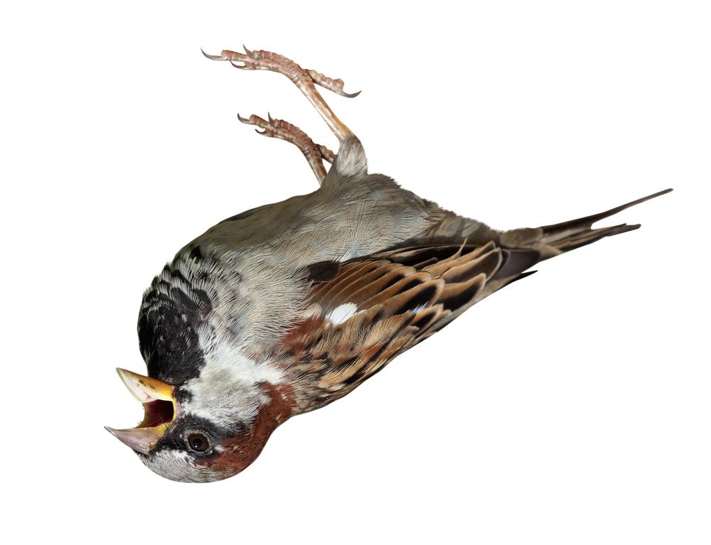 House-Sparrow-1